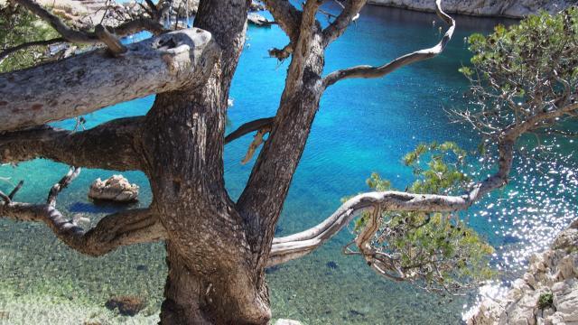 Calanque de Morgiou à Marseille, eau turquoise et pins