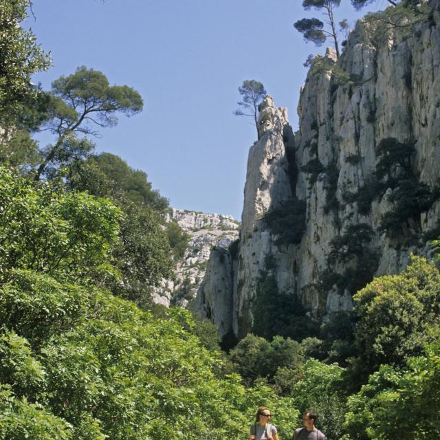 Randonnée dans les Calanques de Marseille, Randonneurs sur le chemin d'accès Calanque d'En Vau entourés de nature et de falaises