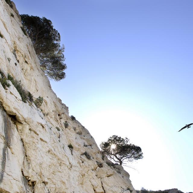 Falaise calcaire dans les Calanques et mouette en vol