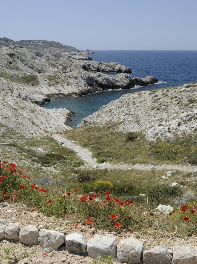 Iles du Frioul Marseille, crique et coquelicots