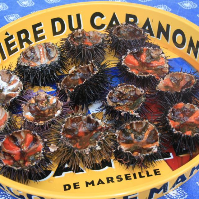 Posé sur une nappe bleu un plateau jaune publicitaire de la Bière la Cagole, inscrit le Bière du Cabanon avec à l'intérieur 14 oursiins ouverts avec le corail orange à Marseille