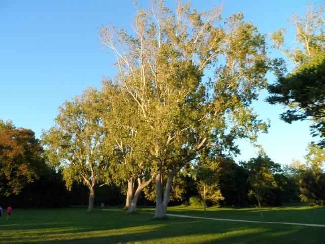 Parc Borely, arbre et végétation
