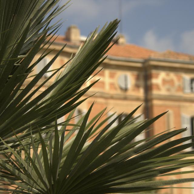 Bastide Pastré en fond d'image et plantes en gros plan