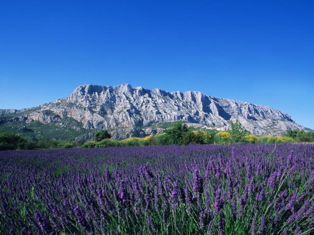 Journée en Provence, champs de Lavandes et Sainte Victoire