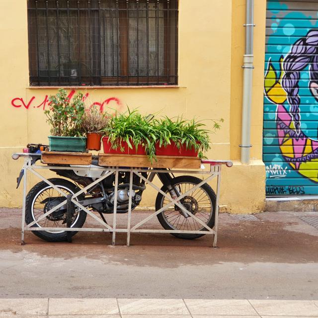 Vélo et jardinières