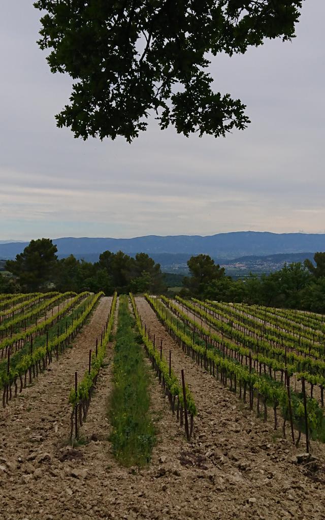 Vignoble Aixois